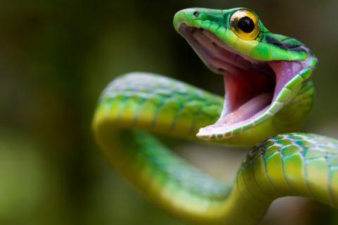 Топ 10 самые ядовитые змеи в мире