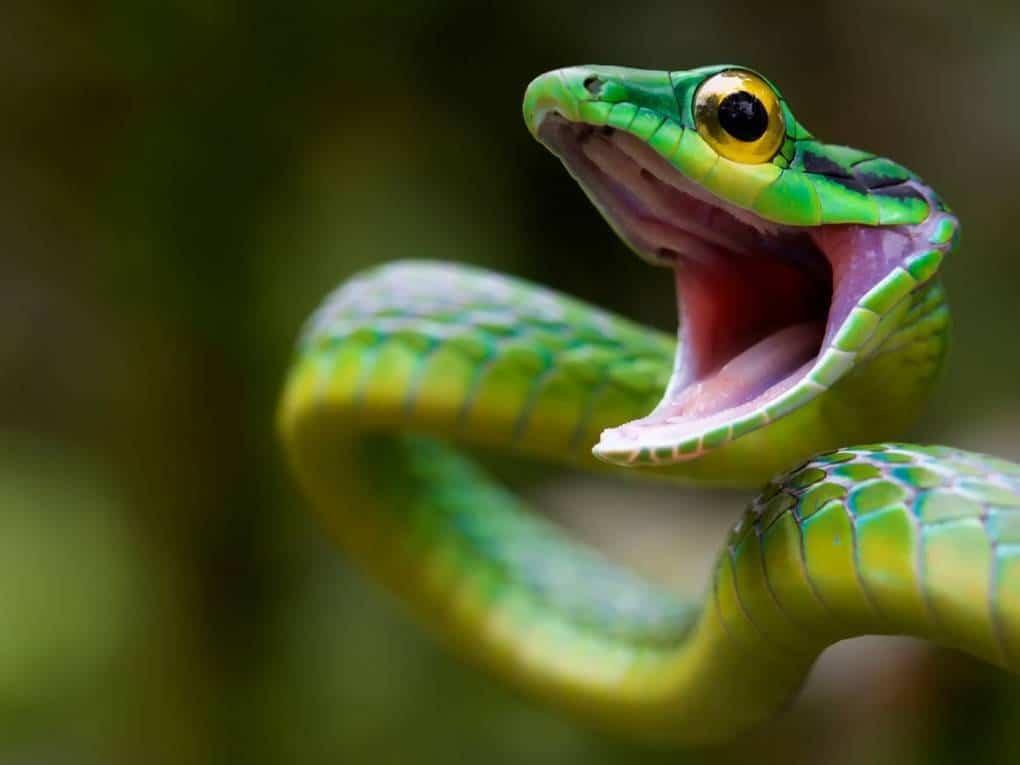 Топ-15 самых ядовитых змей в мире