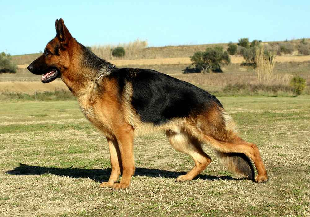 Самые злые собаки мира