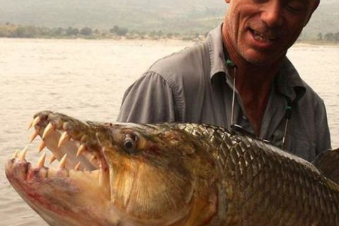 Топ 10 самые большие пресноводные рыбы в мире