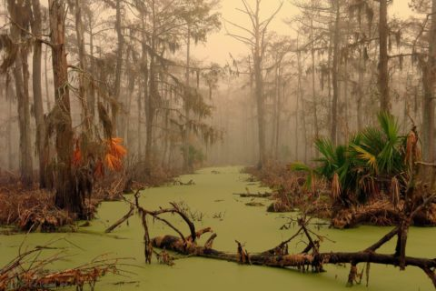 Болото Манчак, Луизиана