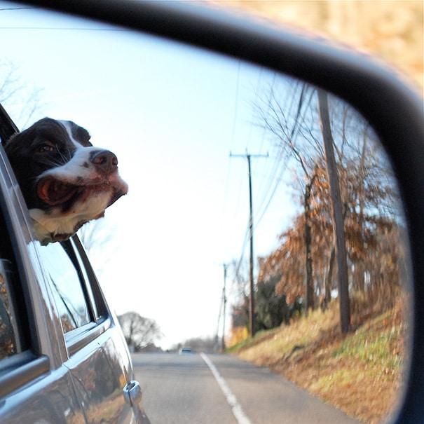 dogs-on-joyrides-21__605