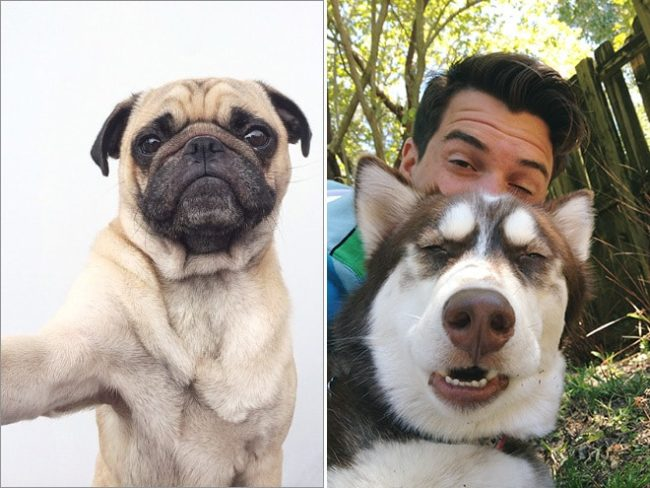 dog-selfie10