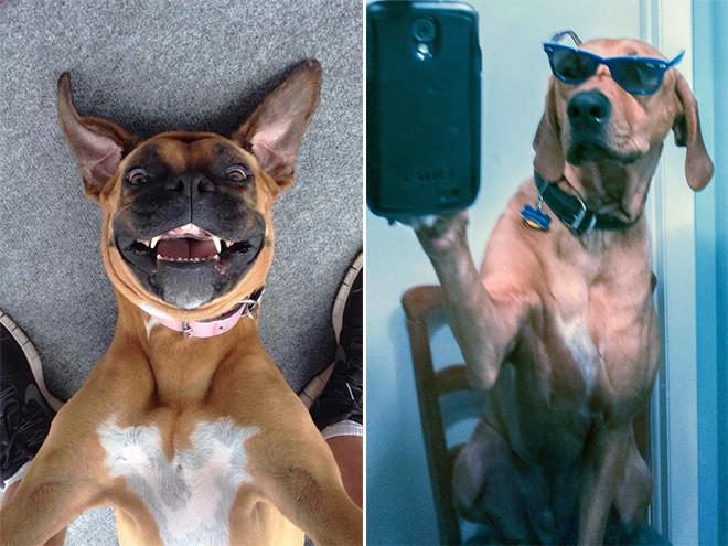 dog-selfie17