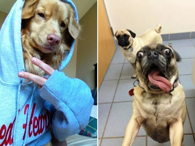 dog-selfie2