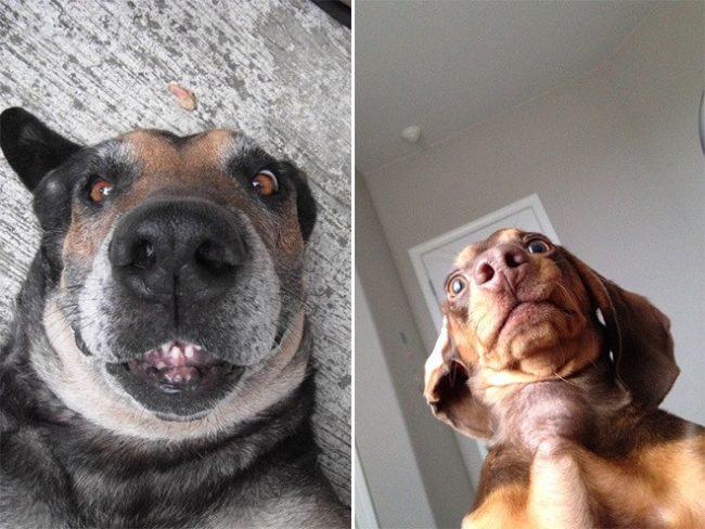 dog-selfie4