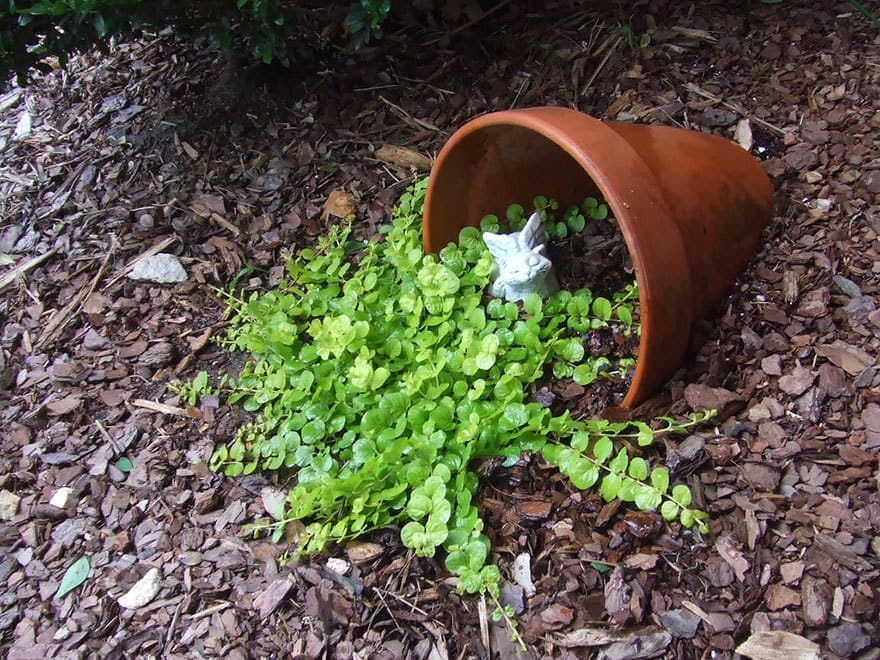 spilled-flowers-garden-ideas-11__880
