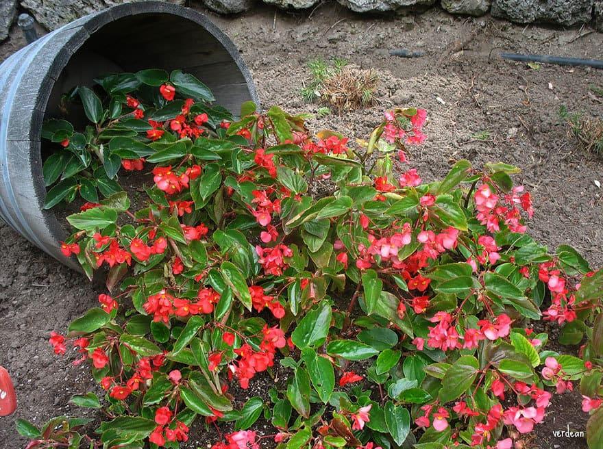 spilled-flowers-garden-ideas-9__880