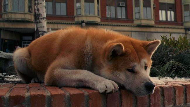 Хатико: Самый постоянный друг