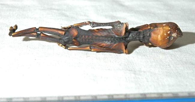 Кыштымский карлик