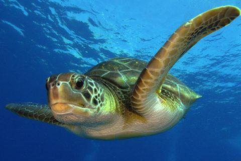 Топ 10 самые крупные черепахи в мире