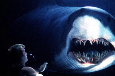 Топ 10 лучшие фильмы про акул