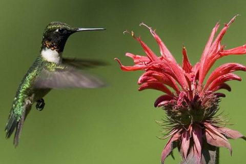 Топ 10 самые маленькие птицы в мире