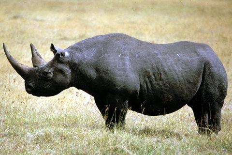 Вымершие животные по вине человека — список с описанием
