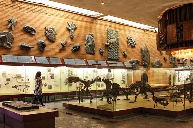 Палеонтологический музей им. Ю.А. Юрлова