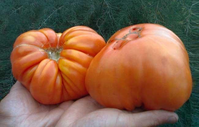 Шапка Мономаха, томат