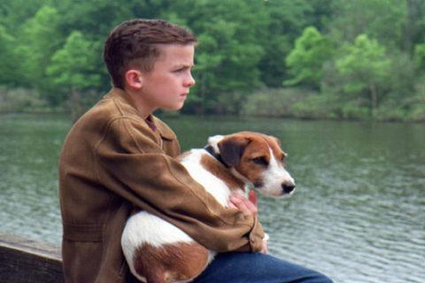 Топ 10 детские фильмы про собак
