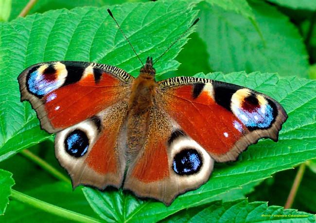 Картинки по запросу самые красивые бабочки картинки