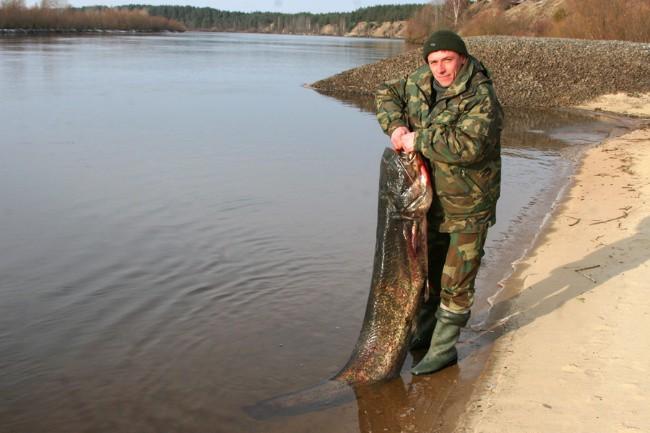 сом из Белоруссии