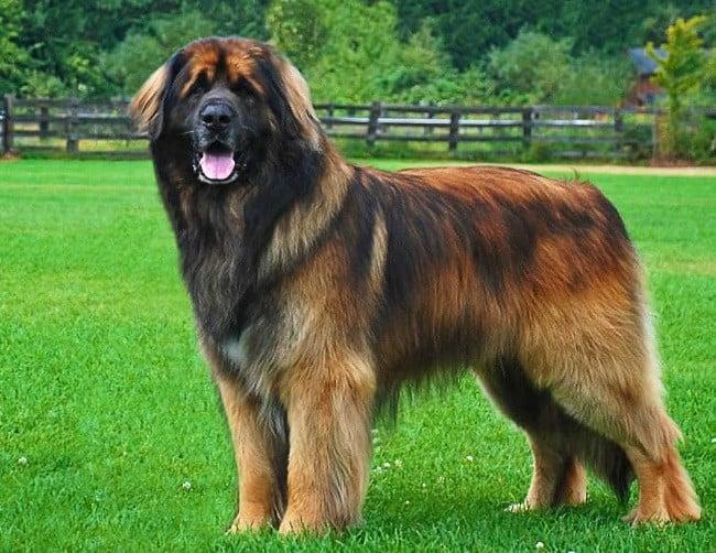 Самые красивые собаки в мире фото и породы