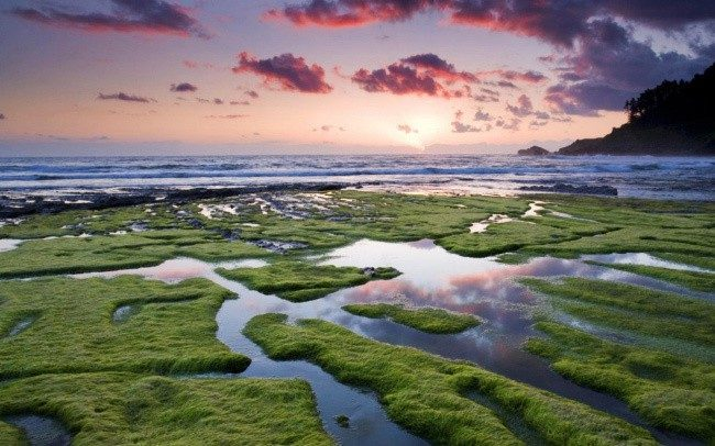 Саргассово море