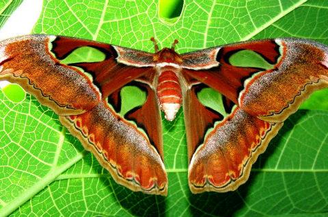 Самые большие бабочки в мире