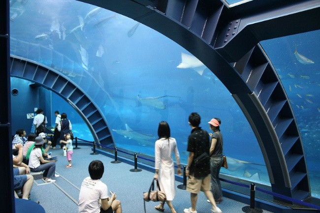 The Okinawa Churaumi Aquarium