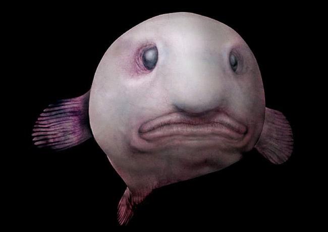 Рыба – капля