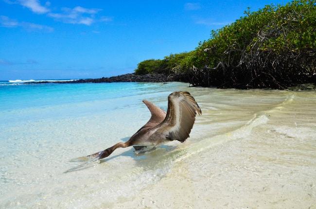 Galapagos Beach at Tortuga Bay пляж