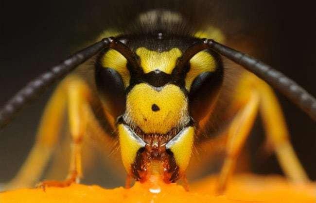 ТОП самых опасных насекомых в мире