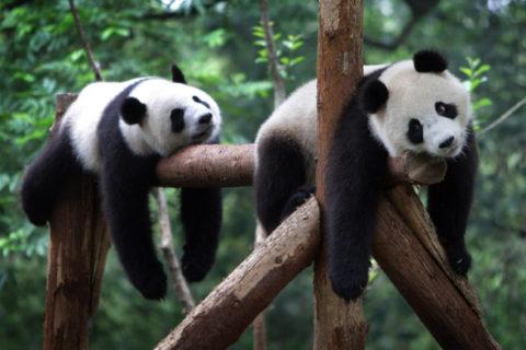 Самые большие зоопарки в мире