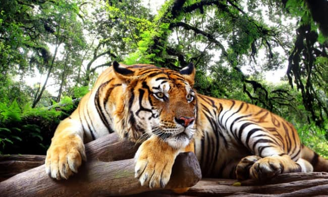 Зоопарк Претории