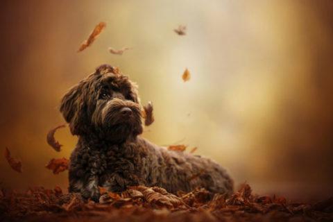 10 интересных фактов о собаках
