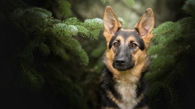 Собаки способны видеть сновидения