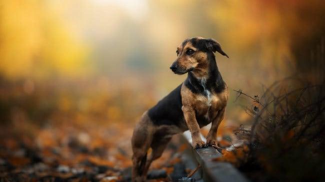 Анализ запахов у собак на 40% превосходит человеческий