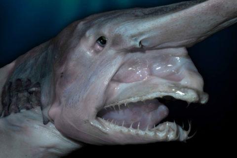 10 чудовищ, которые были обнаружены в глубинах океана