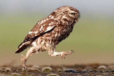 Самые удивительные и интересные факты о птицах
