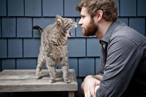 10 вещей, которые ненавидит ваша кошка