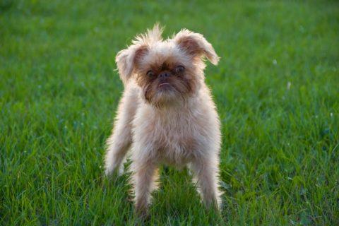 10 самых страшных пород собак в мире