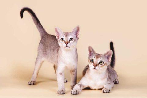 10 самых ласковых и добрых пород кошек