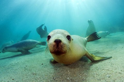 10 самых опасных морских животных в мире