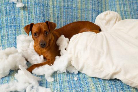 10 веских причин не заводить собаку