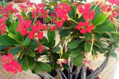 10 опасных растений, к которым лучше не приближаться
