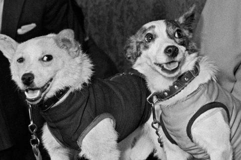 10 самых знаменитых собак