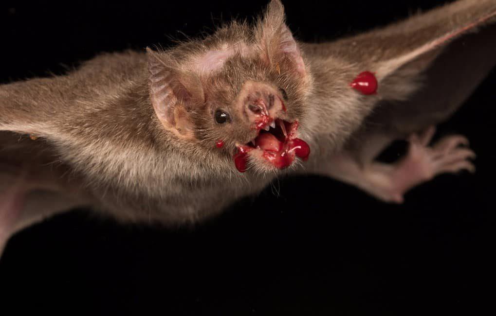следует картинки укусов летучих мышей второй половине