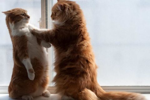 10 фактов о поведении животных, которые вы не найдёте в учебнике по биологии