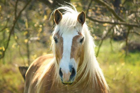 10 животных, способных исцелить человека