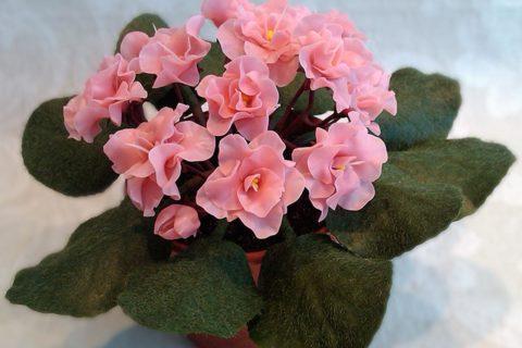 10 комнатных растений, которые приносят благополучие в семью