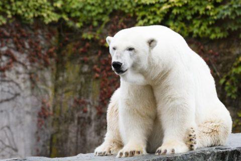 Топ 10 самых крупных животных планеты