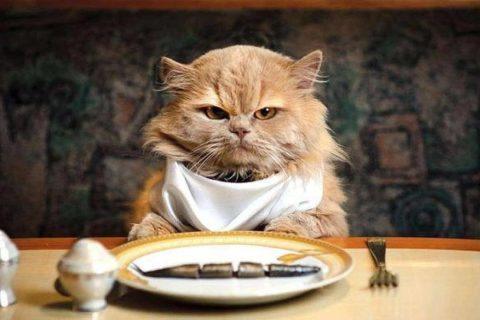 10 вредных привычек кошек, которые мы воспитываем сами